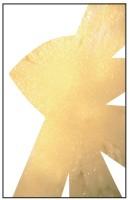14- Blanc et jaune