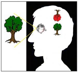 Image du cerveau de l'oeil-1